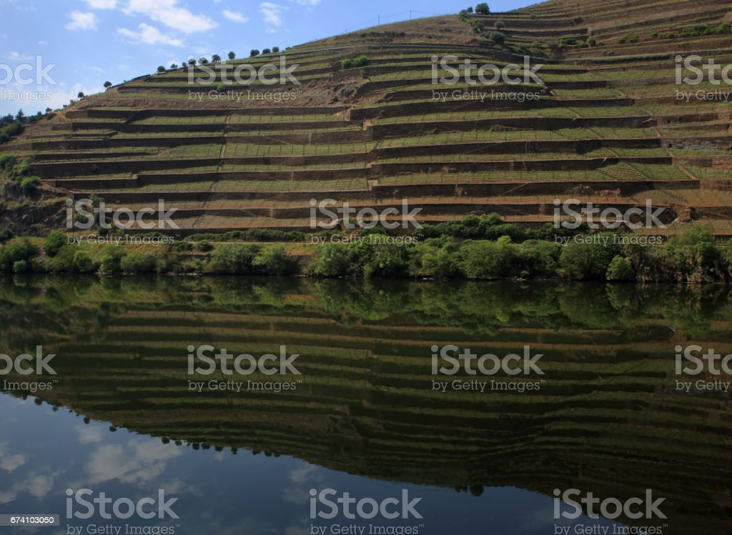 Portugal, Douro Region, Pinhao. Detail of the Douro River with vineyards  in reflected on the water. UNESCO World Heritage Site. stock photo