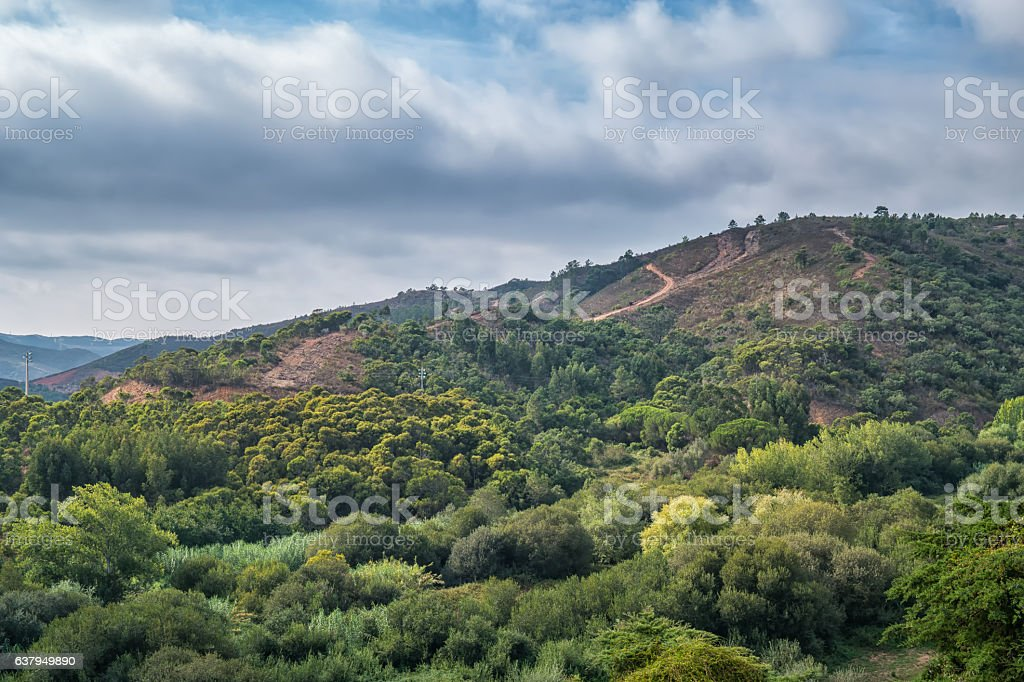 Portugal - Mountain and forrest stock photo