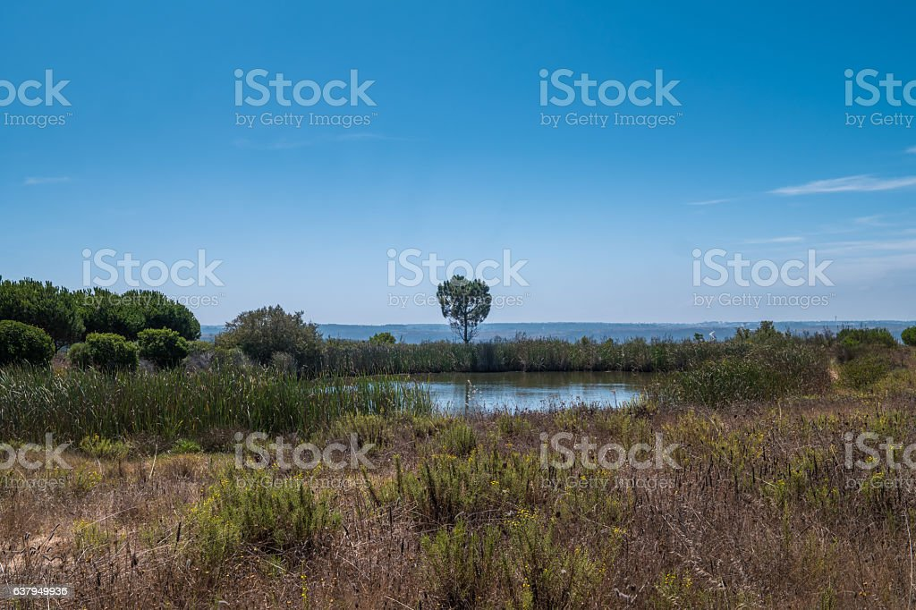 Portugal - Trees and meadow stock photo