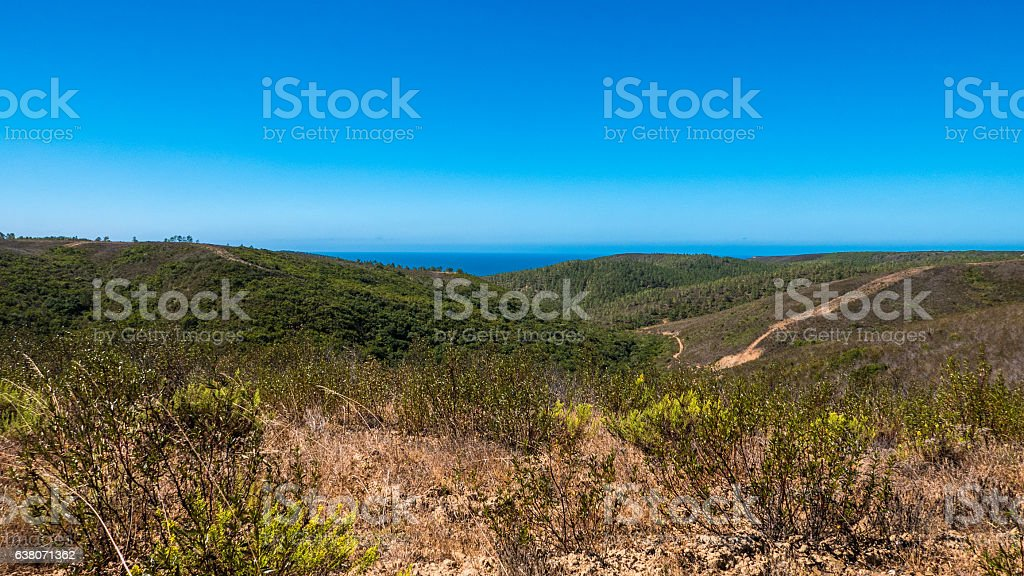 Portugal - Trees and ocean stock photo