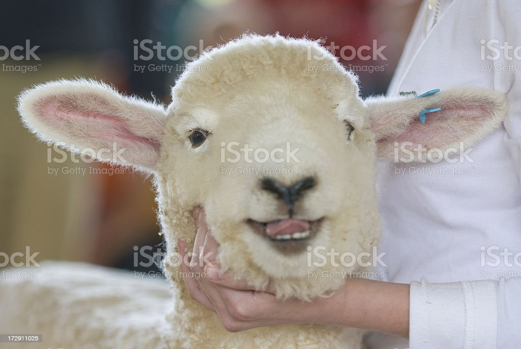 Pose with a Smile at Agricultural Fair royalty-free stock photo