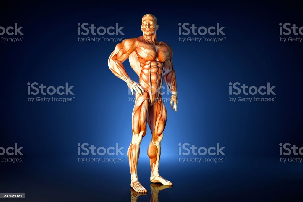 Posing athlete. Anatomical illustration. Contains clipping path stock photo