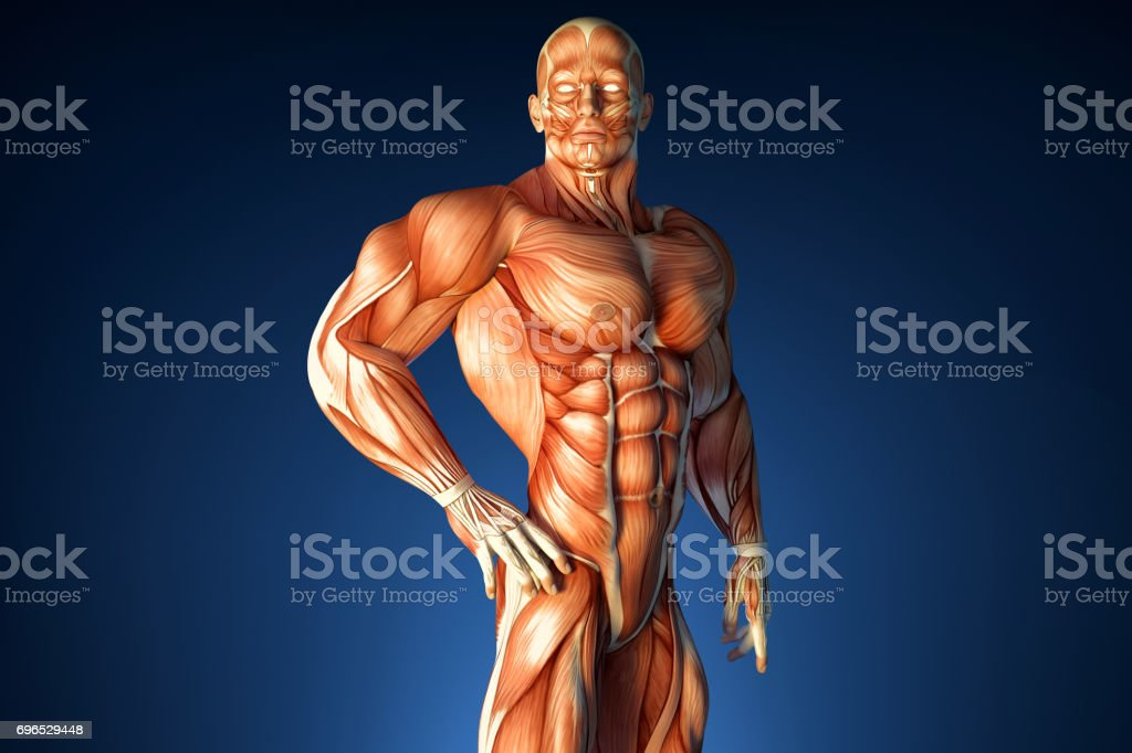 Posing bodybuilder. Muscular system. Contains clipping path stock photo