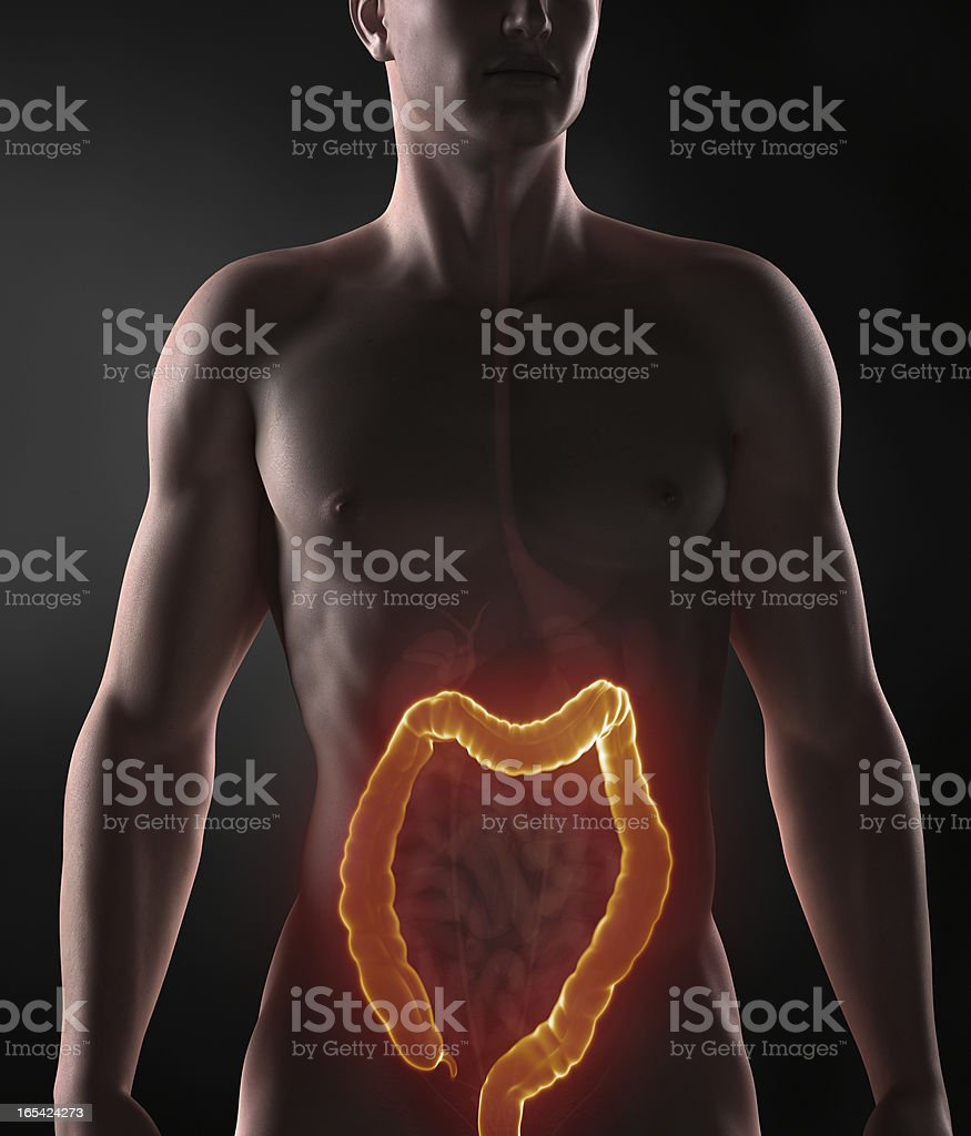 Posing man with colon anatomy royalty-free stock photo