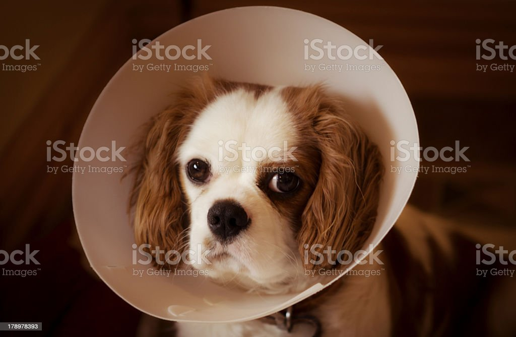 Post Op royalty-free stock photo