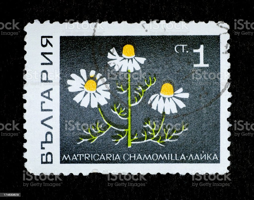 Postage Stamp: Scented Mayweed (Russia) royalty-free stock photo
