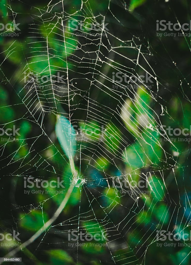 Postcard for Halloween. A mystical spider's web stock photo
