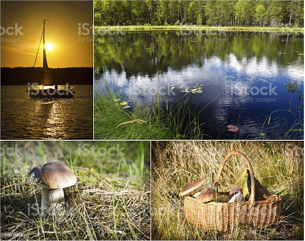 Postcard from sunny wild forest royalty-free stock photo
