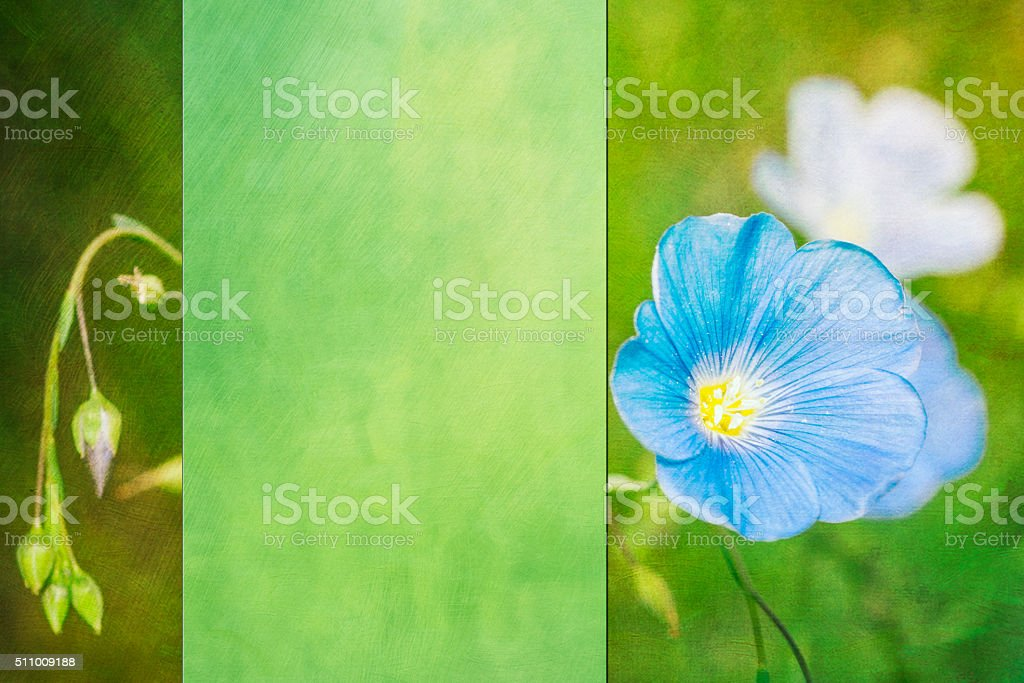 Postcard style background with blue flower stock photo