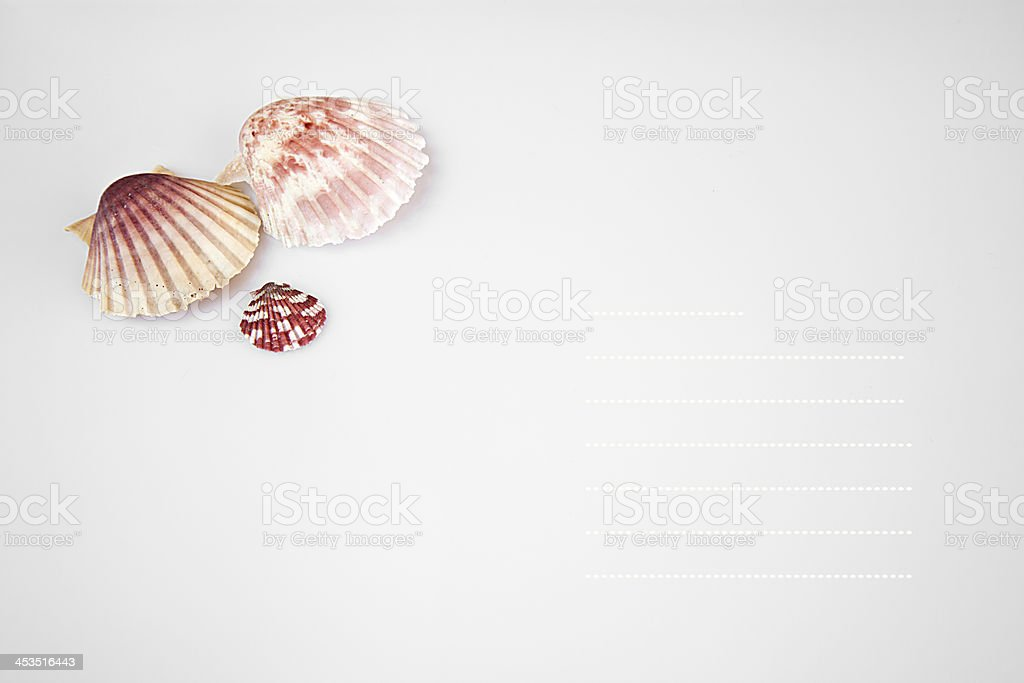 Postcard with tree shells. royalty-free stock photo