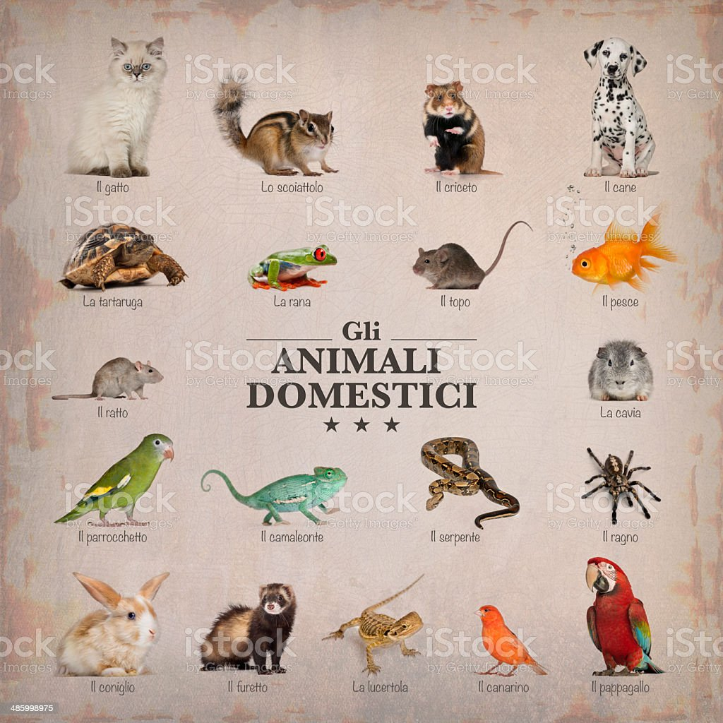 poster of pets in italian stock photo