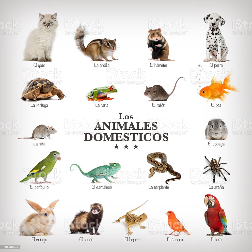 poster of pets in spanich stock photo