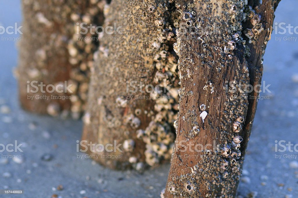 Posts with barnacles stock photo