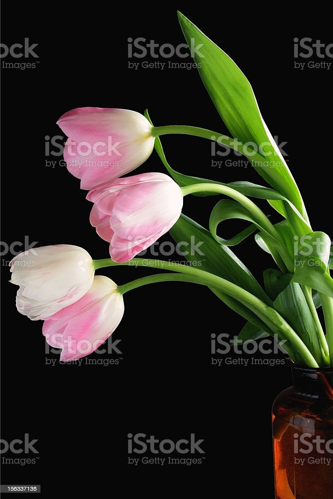 posy of pink tulips on black background royalty-free stock photo