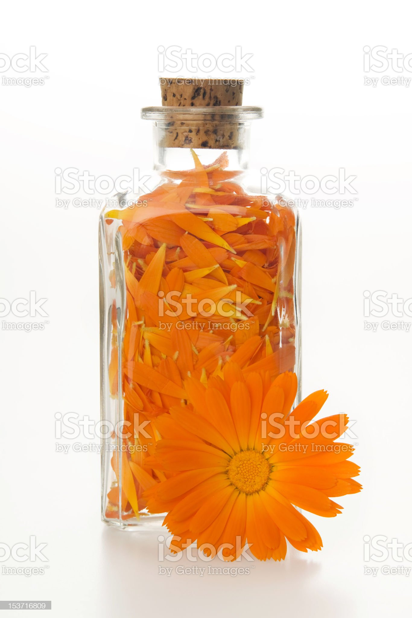 Pot marigold. royalty-free stock photo