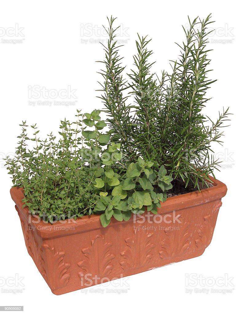Pot of Herbs royalty-free stock photo