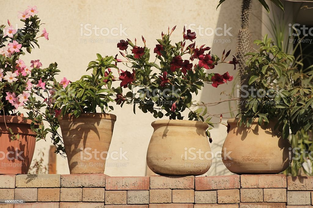 Pot plants. stock photo