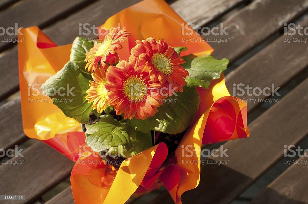 Pot with orange gerberas outside stock photo