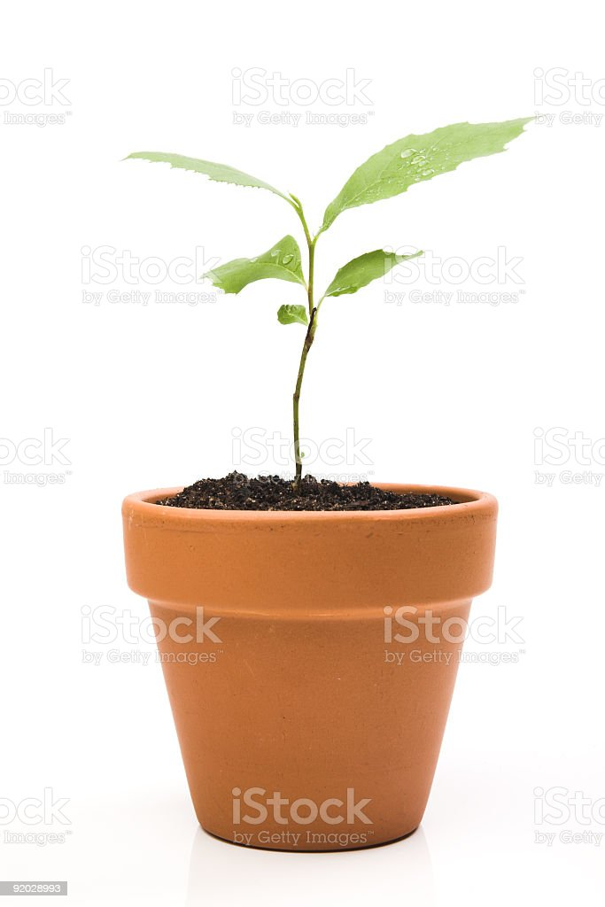 Pot with soil and small plant growing out of it royalty-free stock photo
