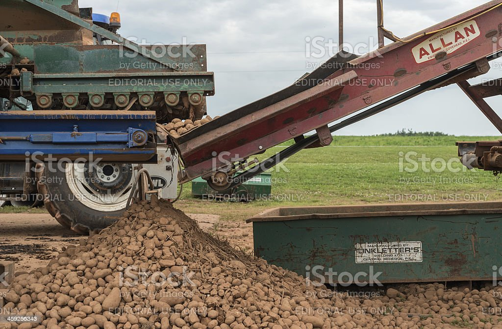 \'Central Bedeque, Canada - July 7, 2012: Potato sorting and...