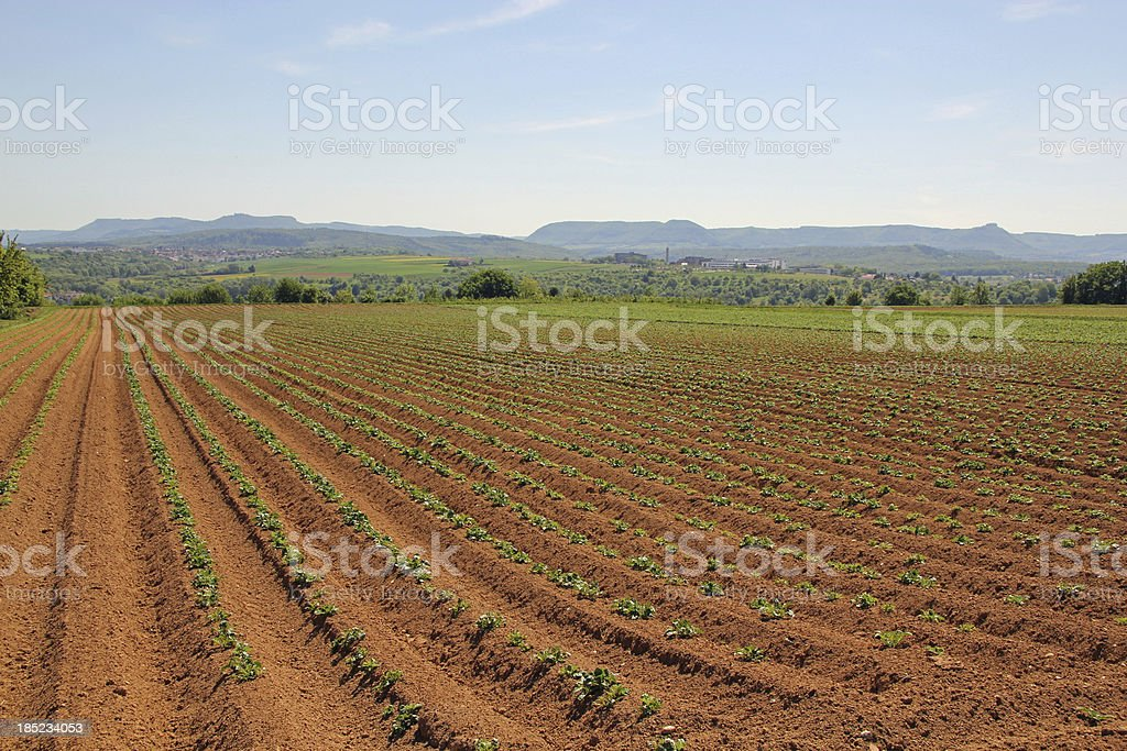 Potato field in Germany royalty-free stock photo