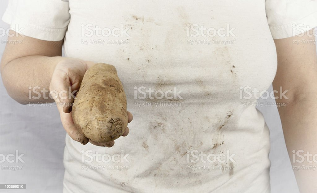 Potato For Lunch royalty-free stock photo