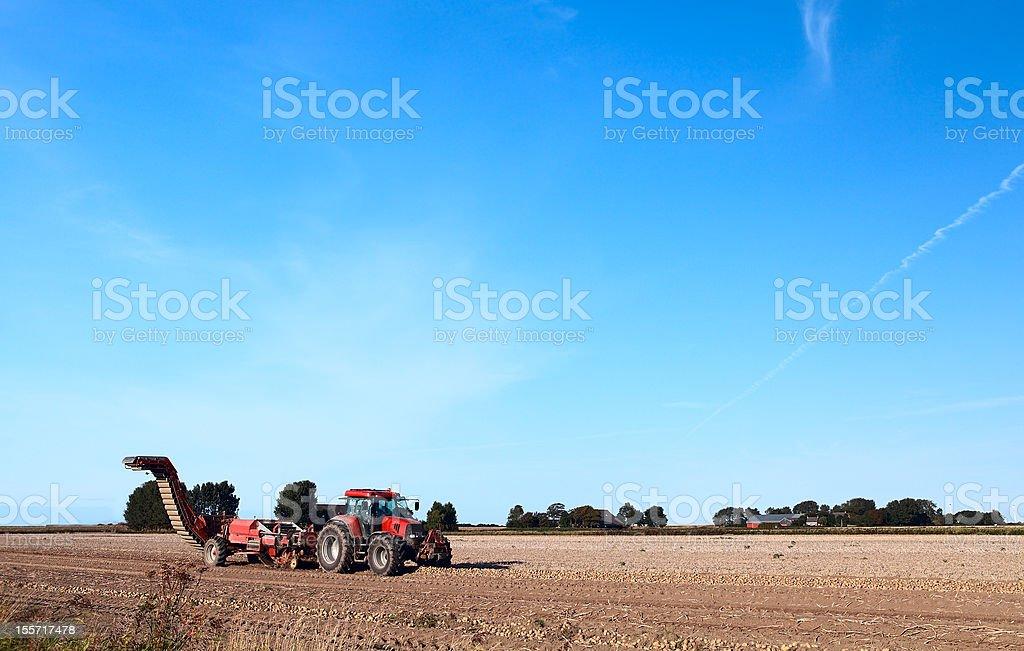 potato harvesting on summer field royalty-free stock photo