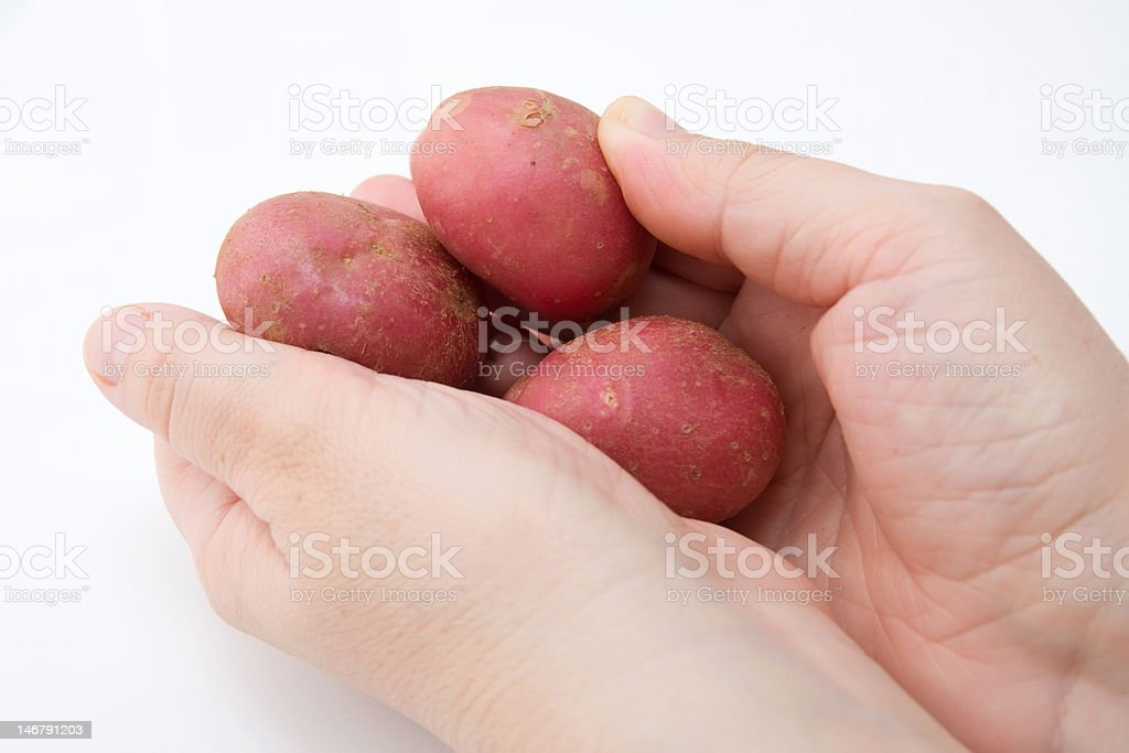 potato in hands royalty-free stock photo