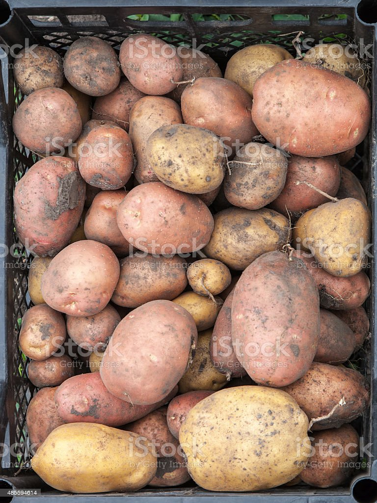 Potato is in the drawer stock photo