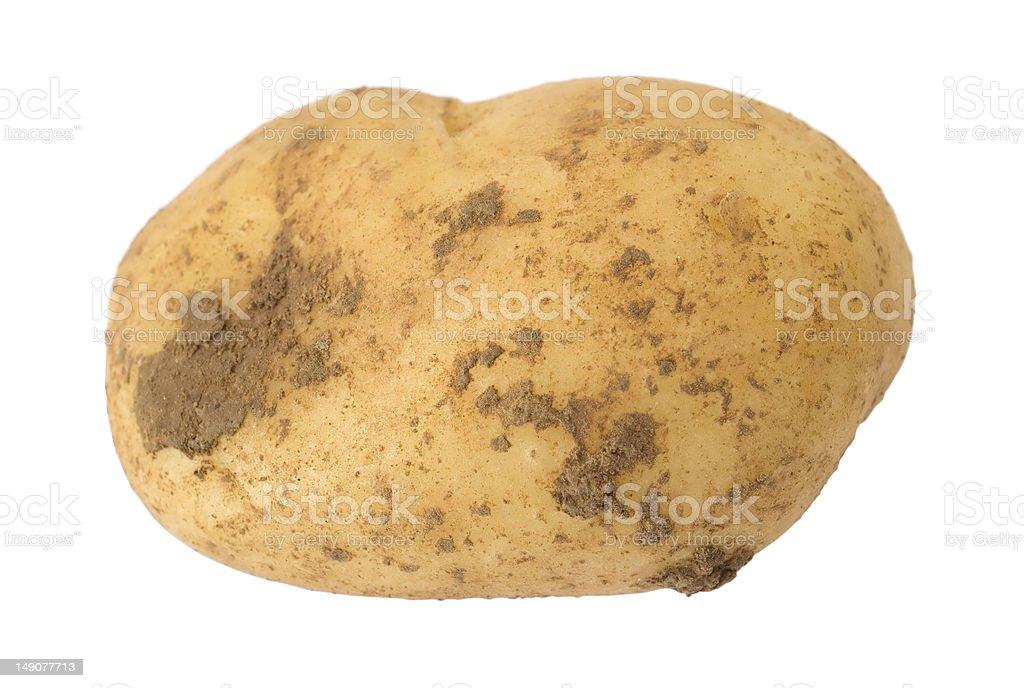 potato over white royalty-free stock photo