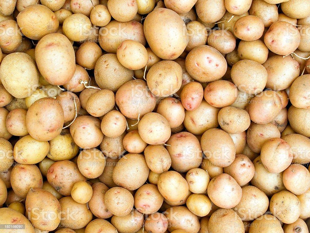 Potato. royalty-free stock photo