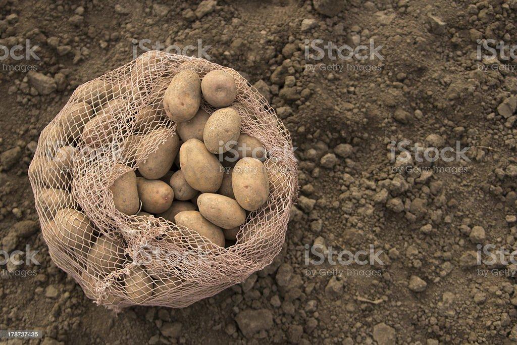 potato royalty-free stock photo