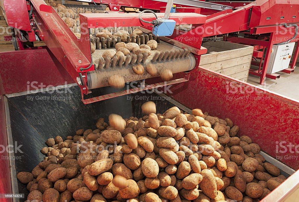 Potato Processing Machine stock photo