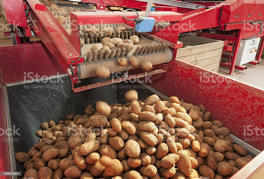 Potato Processing Machine stock photo
