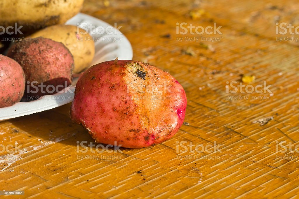 Potato tuber stock photo