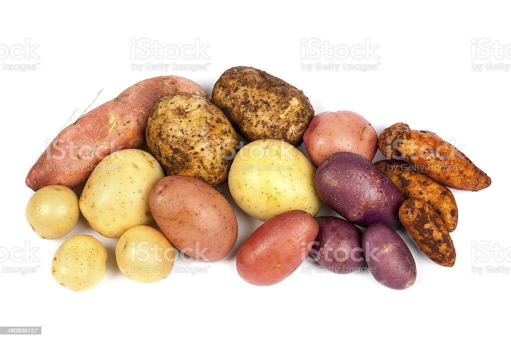Potato Varieties Isolated on White stock photo