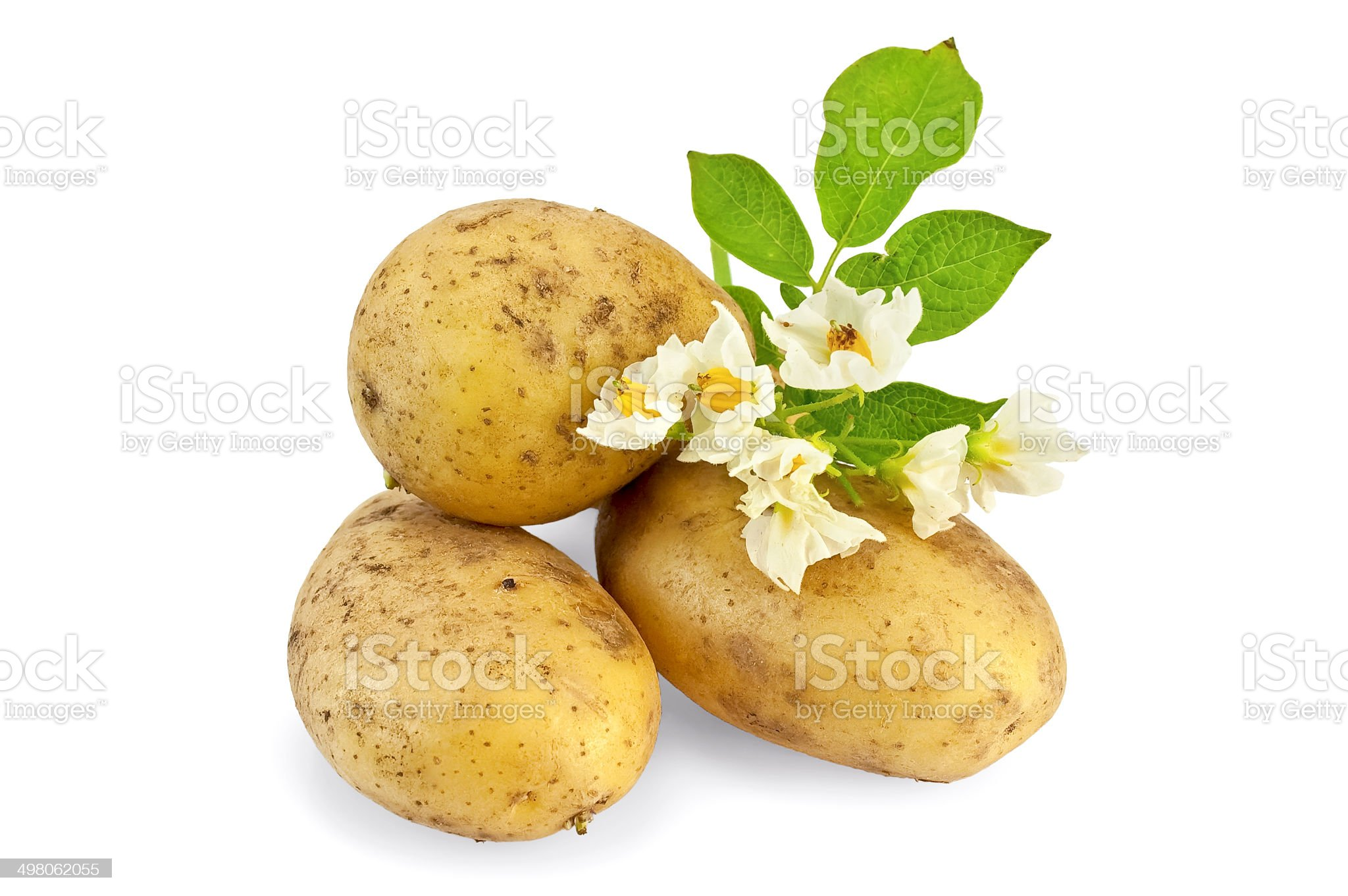Potato yellow with a flower royalty-free stock photo
