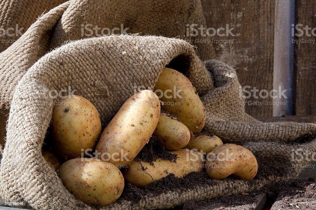 Potatoes 3 stock photo