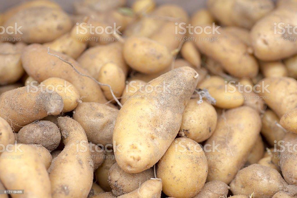Potatoes at a market stock photo