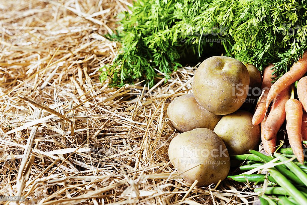 Potatoes, carrots and beans on straw at farmers market royalty-free stock photo