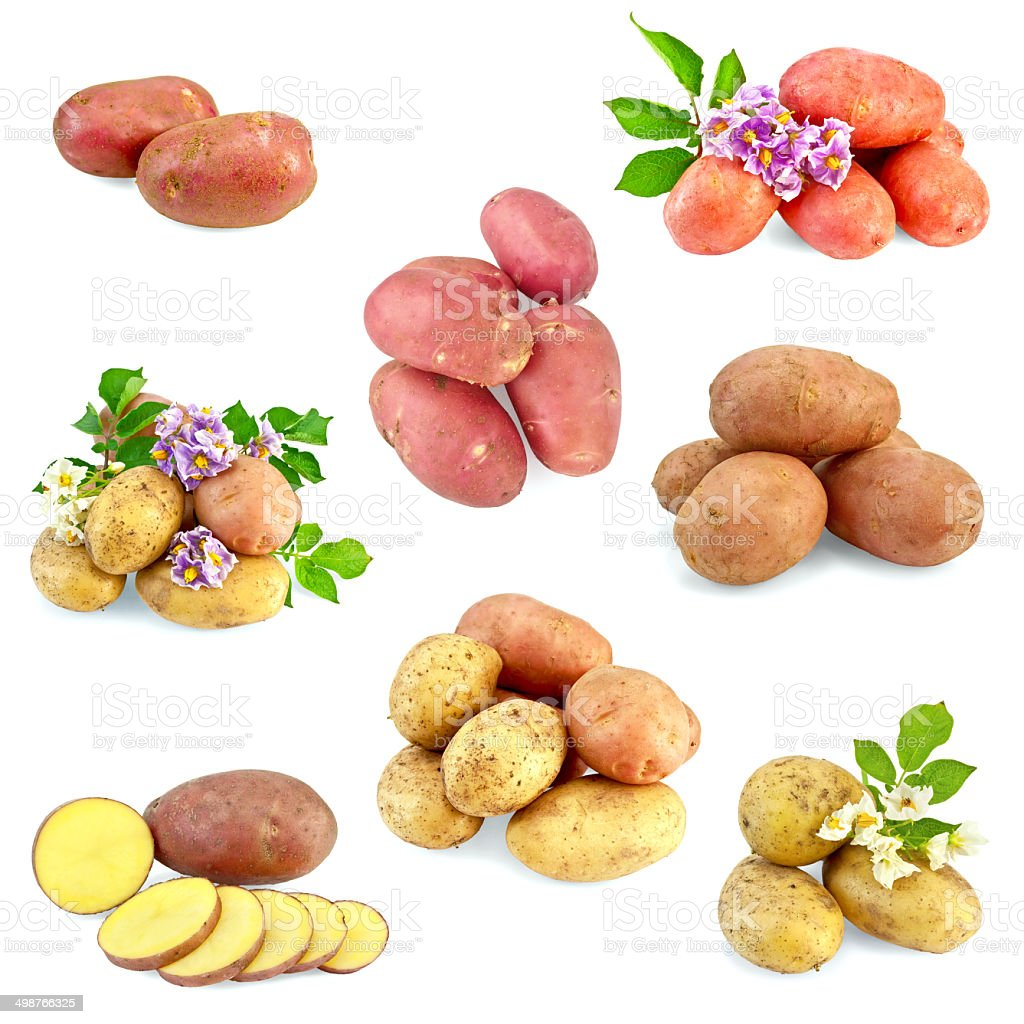 Potatoes different set royalty-free stock photo