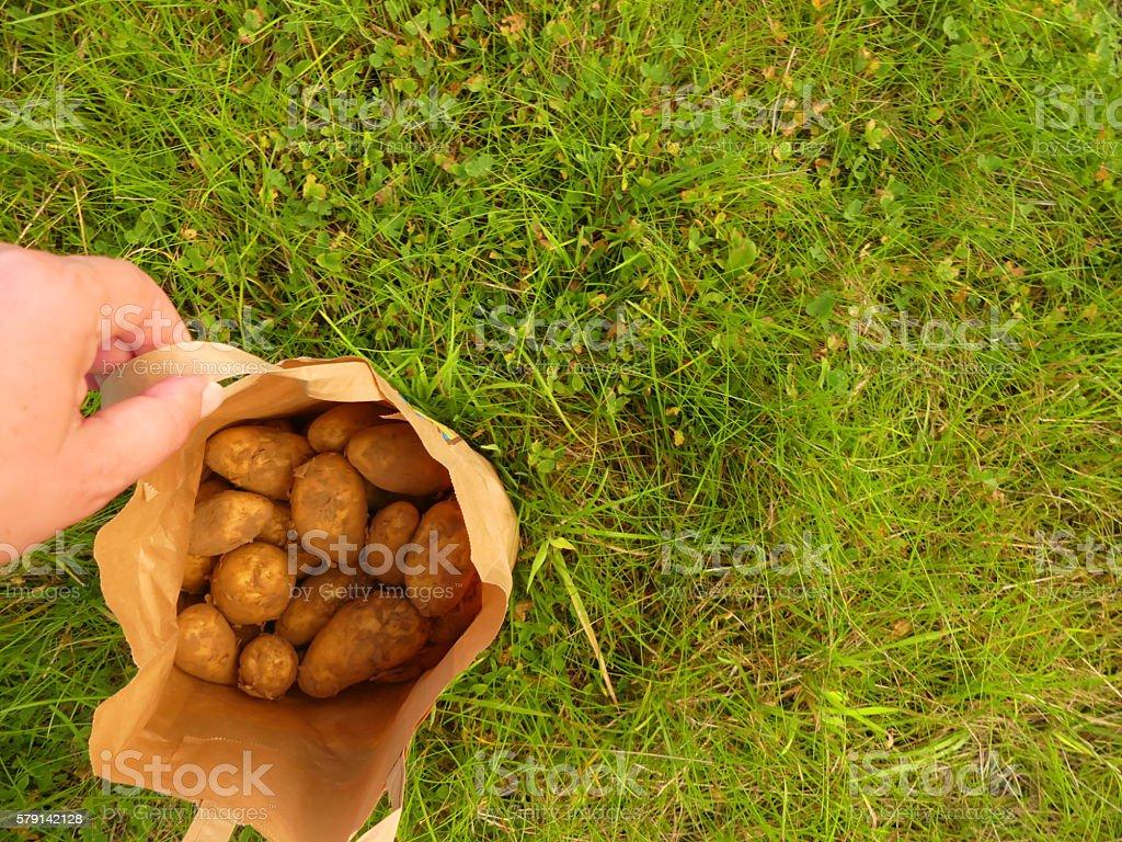 potatoes from farmer stock photo