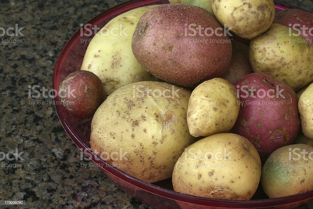 Potatoes from the garden royalty-free stock photo