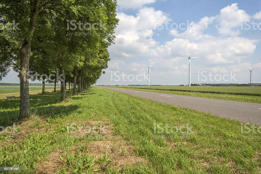 Potatoes growing on a field in summer royalty-free stock photo