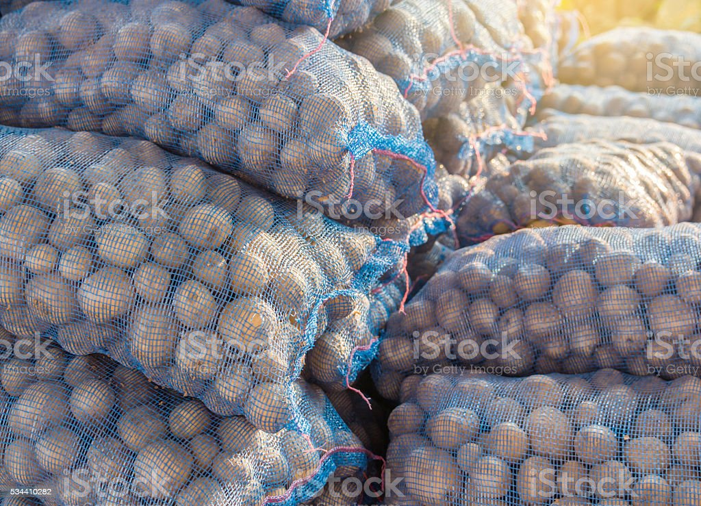 potatoes in the bags. stock photo