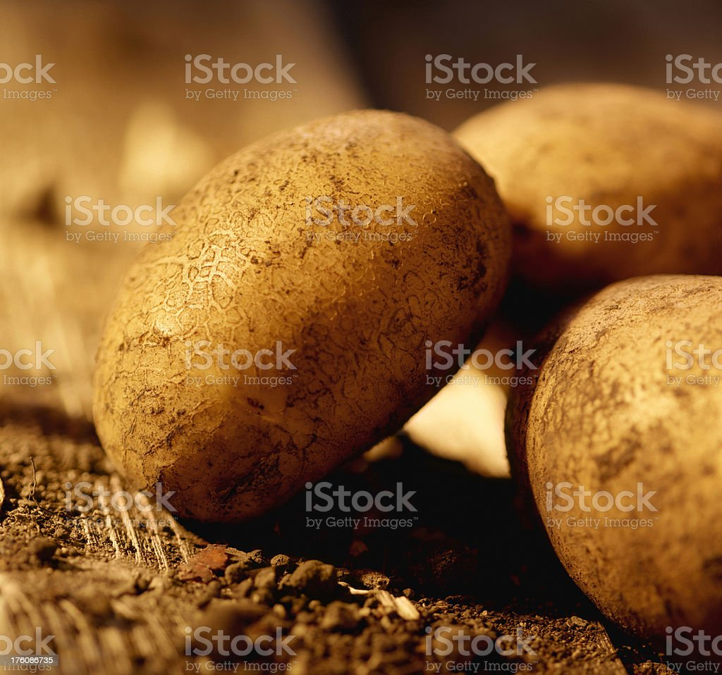 Potatoes right from the Garden stock photo