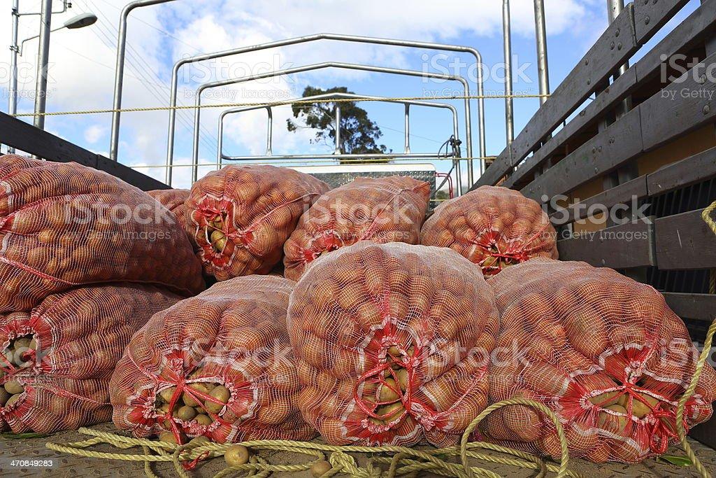 Potatoes Sacks in Truck stock photo