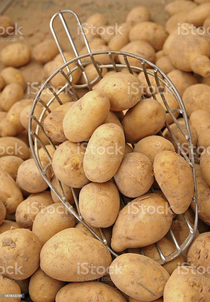 Potatoes with Potato Scoop stock photo