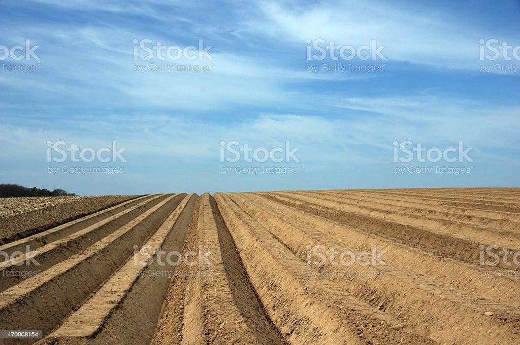 Potatoesfield early spring stock photo