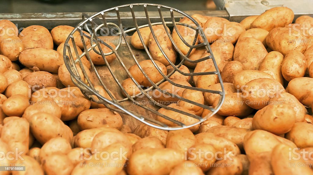 Potatos with potato scoop royalty-free stock photo